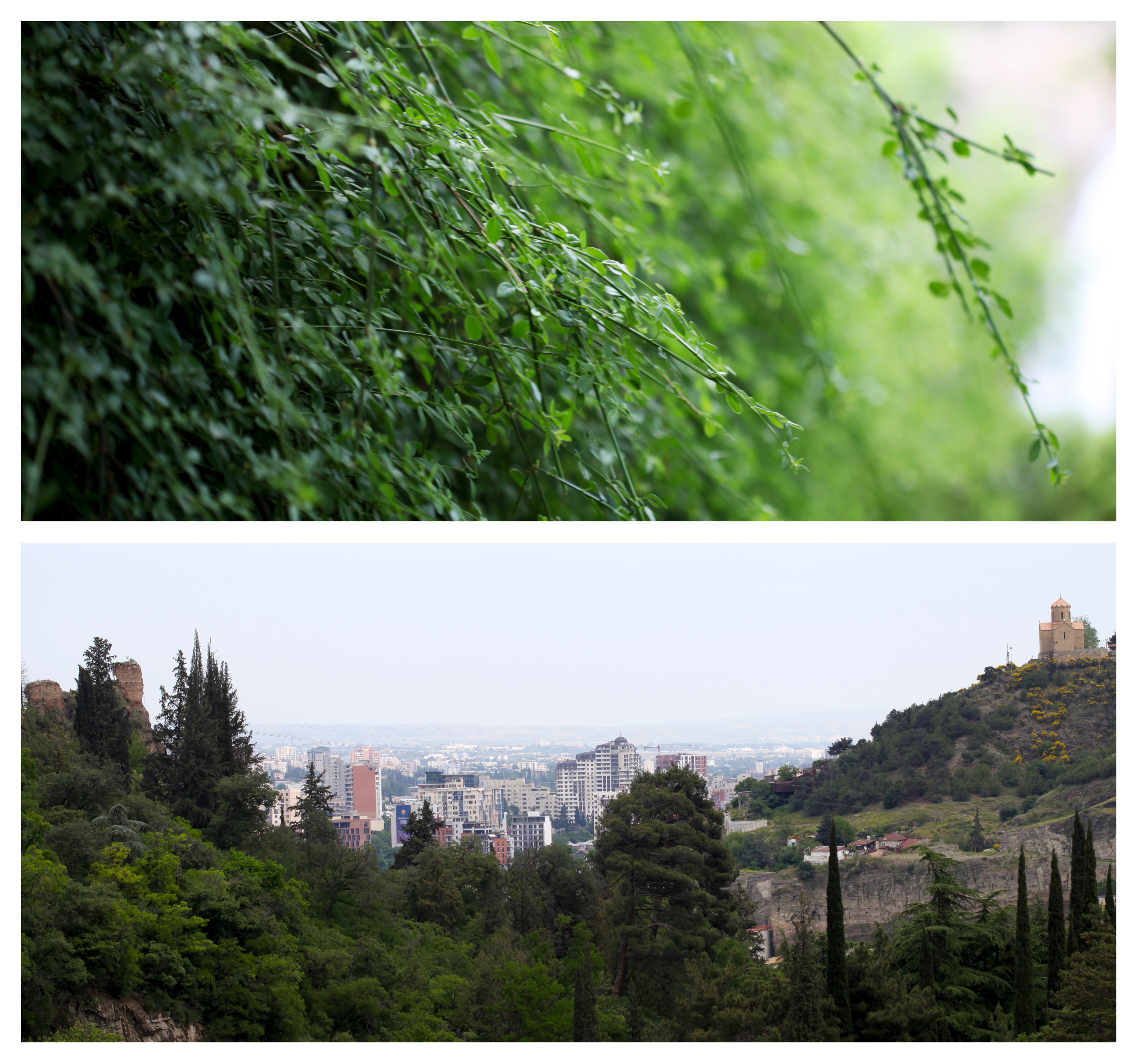 gardens1.jpg