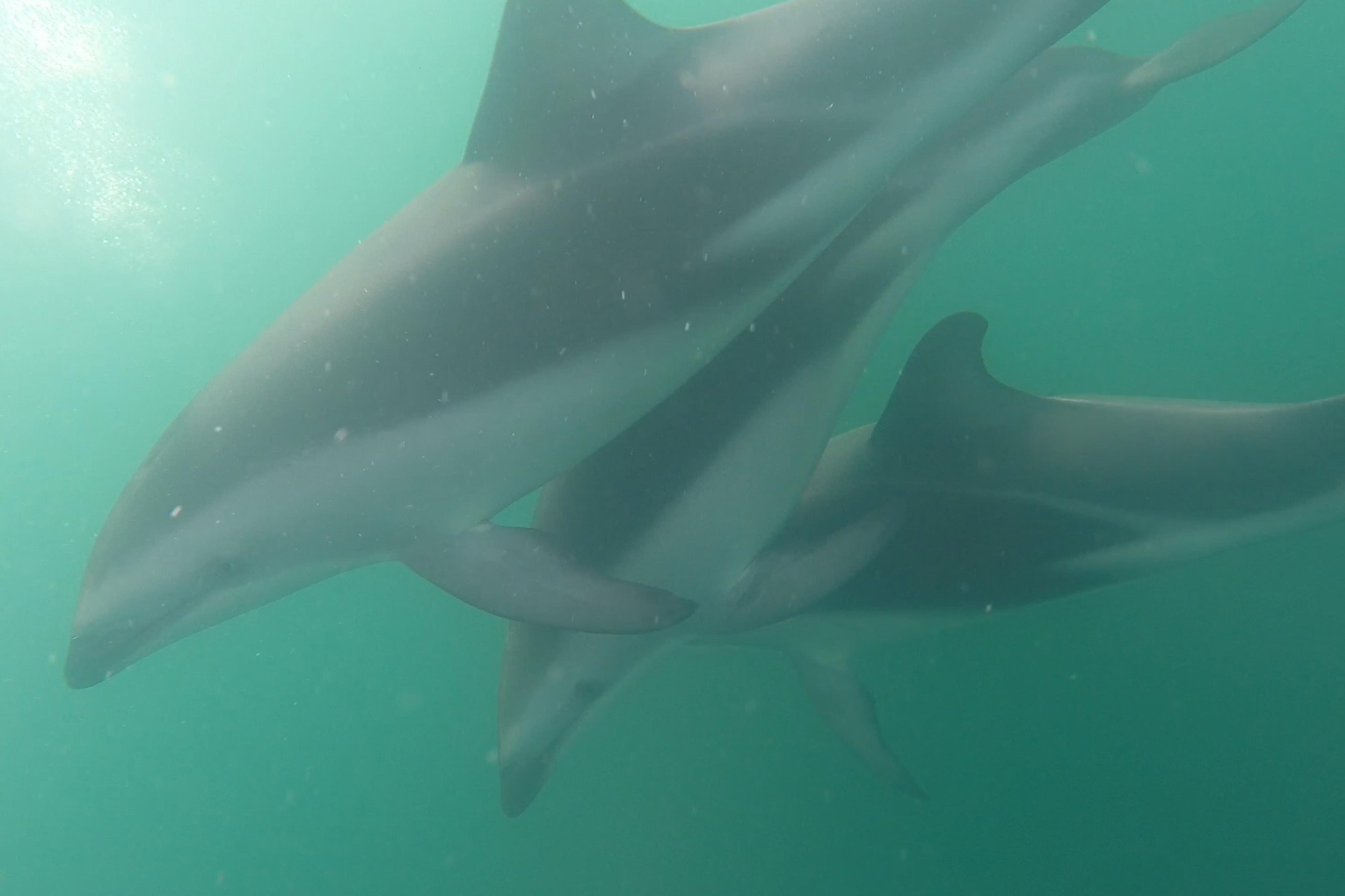dolphins1.jpg