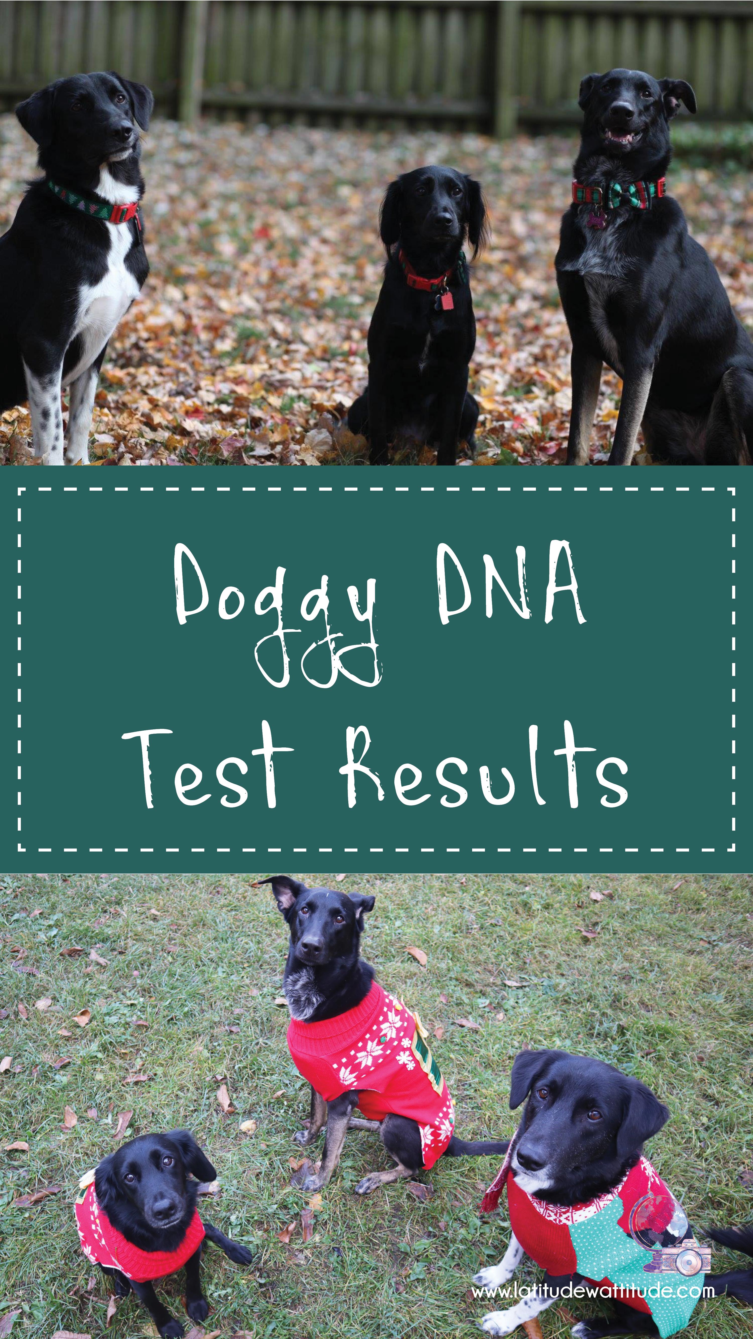DoggyDNA1